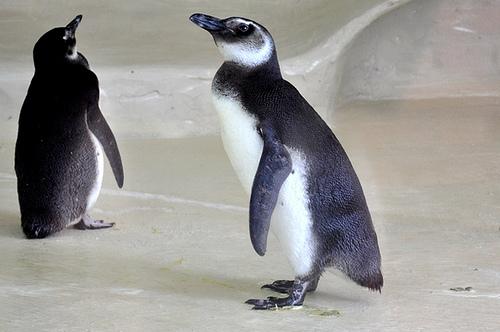 Kostenloses Openbook: Linux - Das umfassende Handbuch